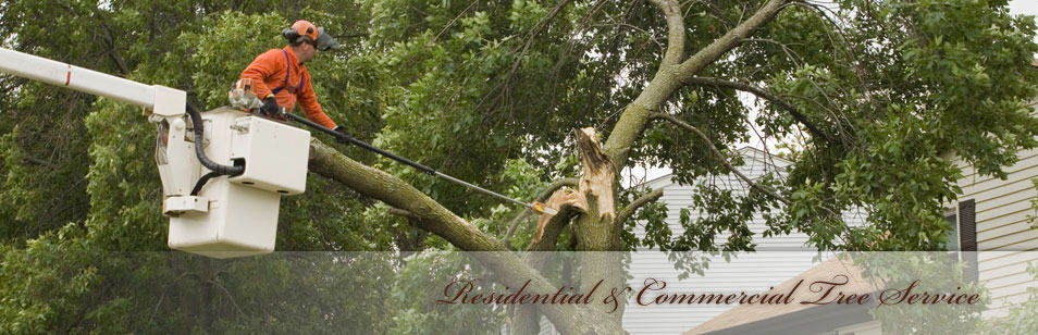 Tree and Stump Removal PA